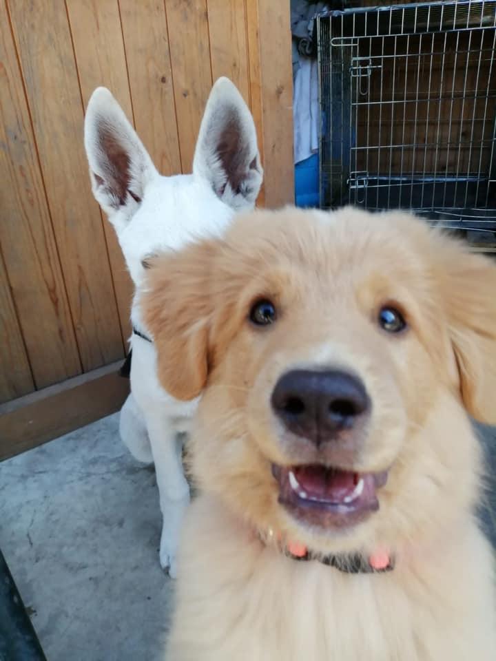 Puppy closeup