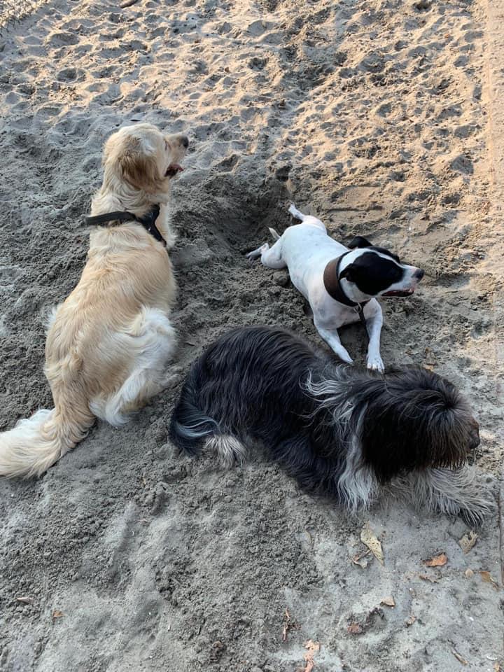 honden in zand
