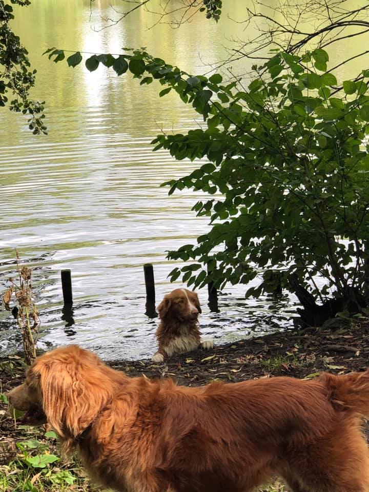 tollers water